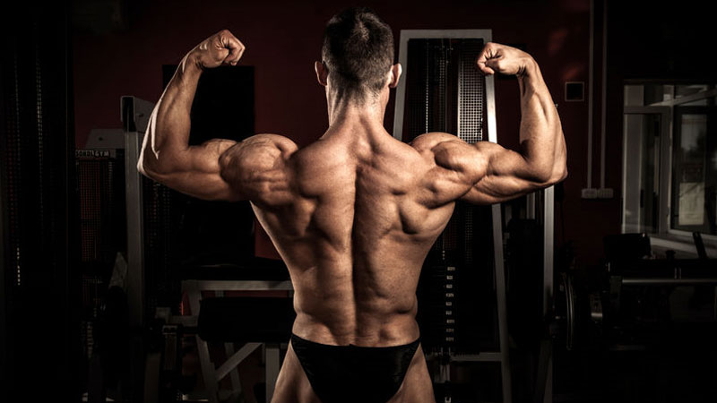 Bodybuilder diet and muscle mass