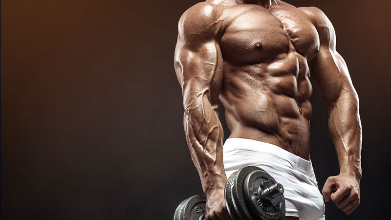 Bodybuilding Muscle Building