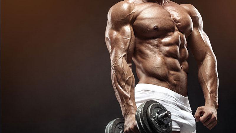 Bodybuilding Muscle Building