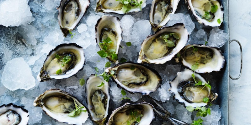 Oysters protein