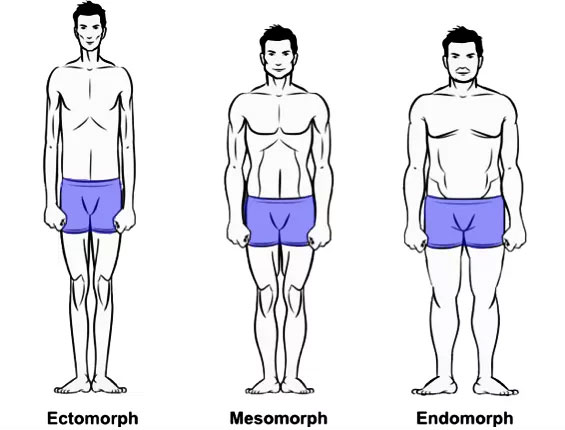 Somatotypes-and-body-shape