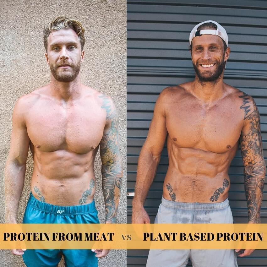 Matt Fox body transformation from meat eater to plant based vegan